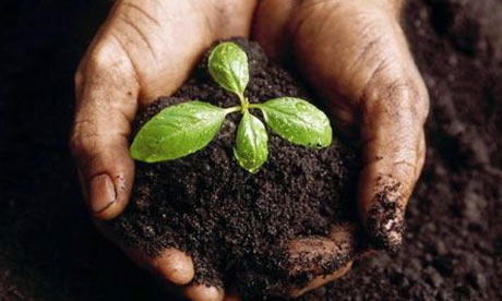 A seedling grown in a potting mixture including Biochar. Photograph: www.biochar-international.org