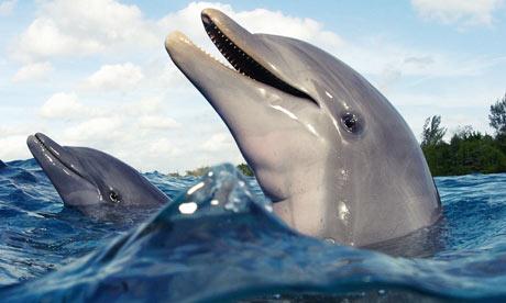dolphins-rampant-001.jpg