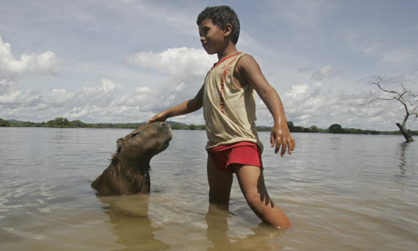 Hydroelectric dam in amazon rainforest environment the guardian
