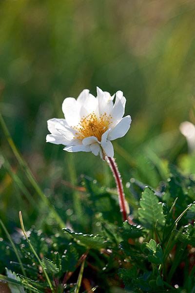 Ten of Britain's rarest wild flowers – in pictures ...