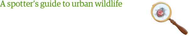 Urban wildlife series badge