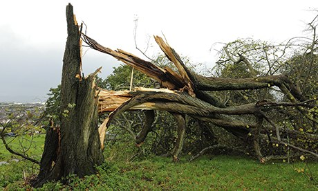 St Jude storm damages trees in Swindon