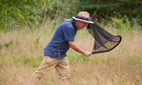 Naturalist Matthew Oates hunts butterflies