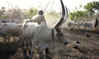 South Sudan unrest exacerbated by conflict among cattle herders