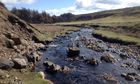 Country Diary : Bollihope valley, Weardale, County Durham,