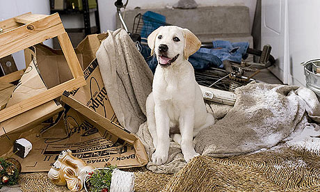 The dog from Marley and Me