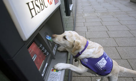 labradors that help the disabled