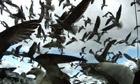 Leviathan film still