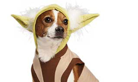 Star Wars pet clothing range Jabba The Hutt Costume For Dogs  sc 1 st  Stansted Airport & Jabba The Hutt Costume For Dogs