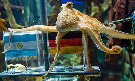Paul the Oberhausen octopus hedges his bets