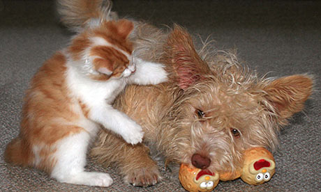 Kitten interacting with dog