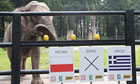 Elephant Citta of Krakow Zoo 'forecasts' the result of the opening match of Euro 2012