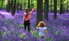 Bluebell woods under threat, experts warn