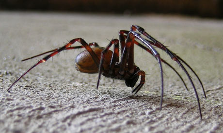 African Cave Dwelling Spider http://www.guardian.co.uk/science/2009/dec/04/cave-spiders-home-vacation