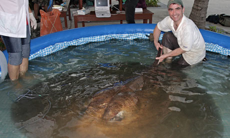 British angler lands monster stingray in thailand world for Goliath tiger fish for sale