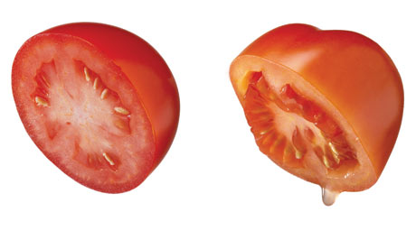 Cut Tomato Drawing is The Non-leak Tomato a