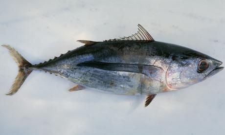 Филиппины нарушают запрет на вылов молоди тунца