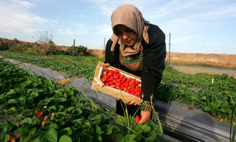 http://static.guim.co.uk/sys-images/Guardian/About/General/2010/11/29/1291057910395/Gaza-farmer-007.jpg