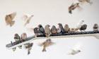 Celeste Boursier-Mougenot Barbican installation