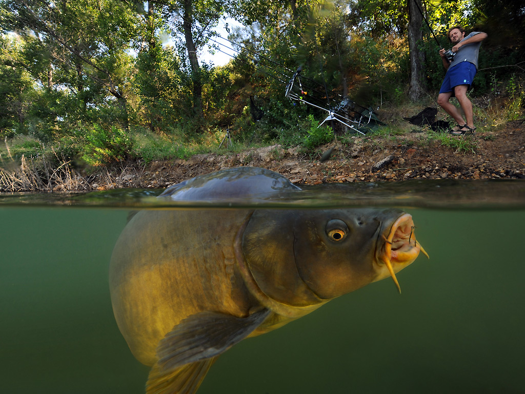 Eyewitness carp fishing world news the guardian for Carp fish pictures