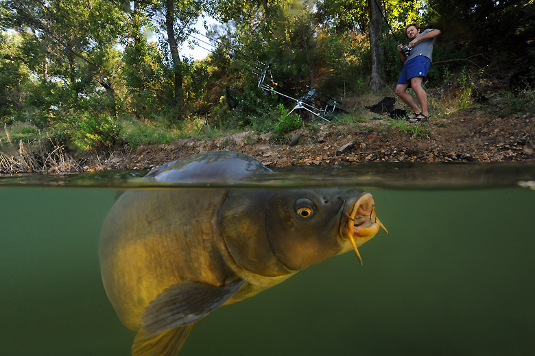 Eyewitness carp fishing world news the guardian for Carp pond design