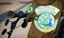 Peckham Peacocks