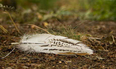 The striking white feather brought a touch of winter to the hottest days of summer