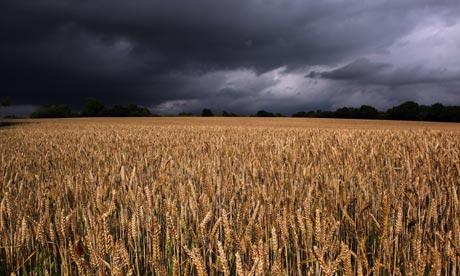 Украина: В Донецкой области из-за боевых действий потеряно около 400 тыс. тонн зерновых