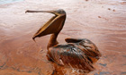 BP spill cost