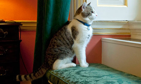 Larry, Downing Street's new cat