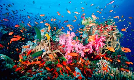 Reefs at Risk report says coral reef, like this one off Fiji are in ...