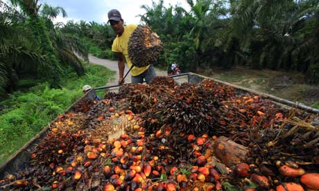 A worker loads palm oil seeds in Serba Jadi, East Aceh, Indonesia
