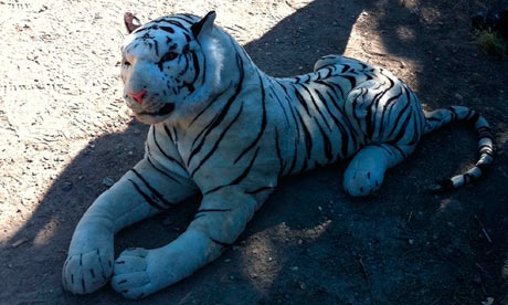 White Tiger Toy