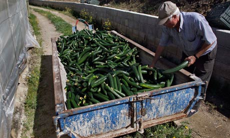 Spanish cucumber farmer