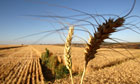 Brazil's Grain Production To Rise 10.5 Percent In 2010