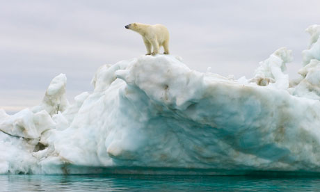 Melting Arctic ice releasing banned toxins