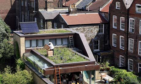 http://static.guim.co.uk/sys-images/Guardian/About/General/2011/8/5/1312566056642/A-rooftop-beehive-in-nort-007.jpg