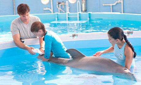 Still from Dolphin Tale