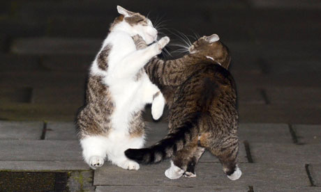 Downing Street cats Larry and Freya fighting