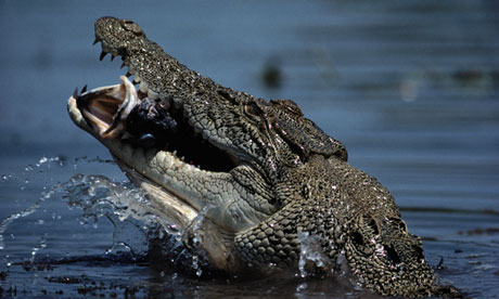 The boy was grabbed by a Crocodile while swimming in a group.