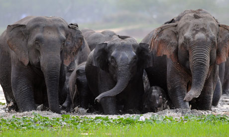 Wildlife officials say they warned train bosses a herd of elephants was in the area.