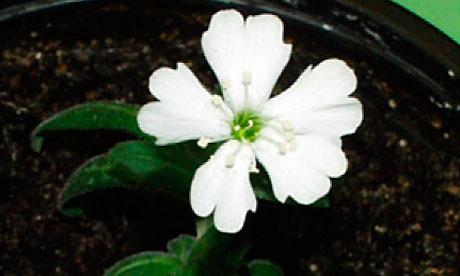 menghidupkan Bunga Berumur 30.000 Tahun