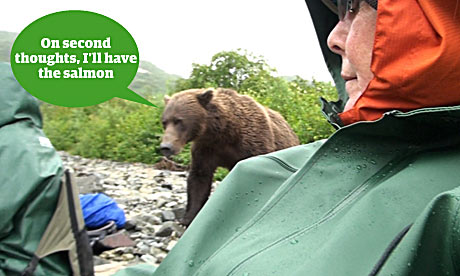What do you reckon the bear might be thinking?