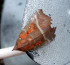 Moth luring