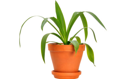Pot Plants In The Office Good Or Bad Life And Style