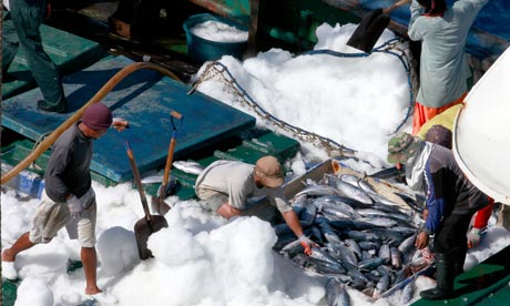Illegal tuna fishing in the Pacific ocean