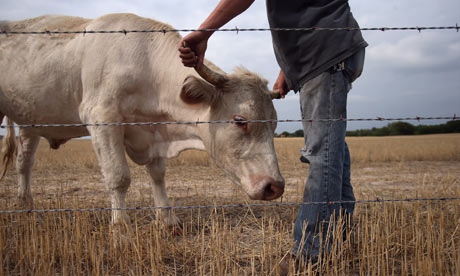 Food shortages could force world into vegetarianism thumbnail