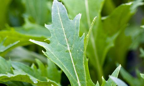 Alys Fowler: oriental greens