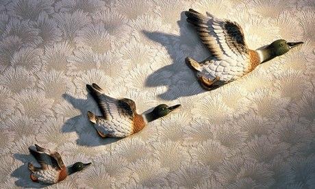 Three-Flying-Ducks-on-the-009.jpg