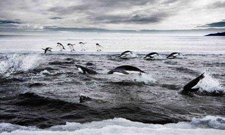 Россия и Украина скорее всего, заблокируют огромный антарктический морской заповедник